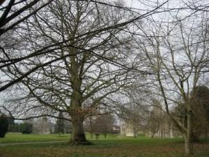 2008-Glastonbury-17