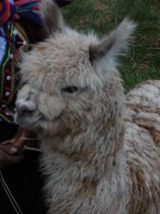 2011-Bolivia-Peru-28